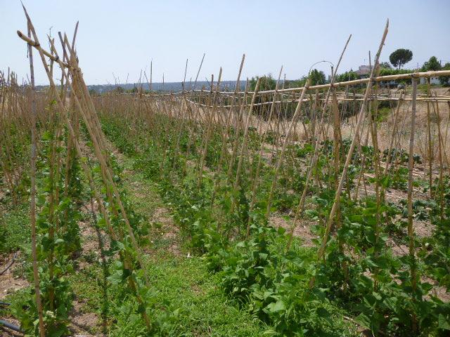 """Articulando el sector: """"Agrupaciones de productores ecológicos"""""""