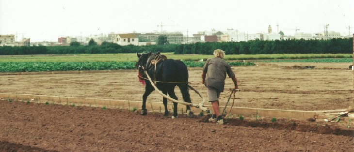 Claves para la comercialización de productos hortícolas ecológicos