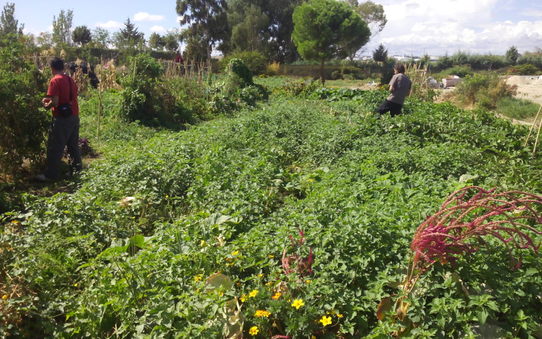 Sistemas participativos de garantía para proyectos alimentarios