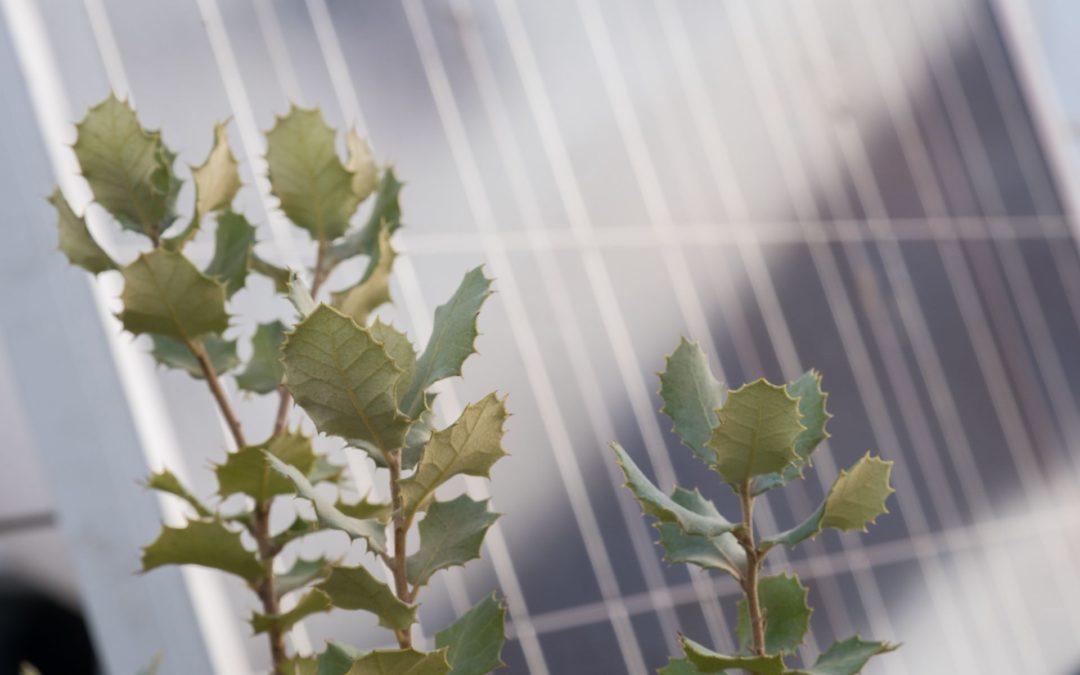 CAP Autoconsumo fotovoltaico